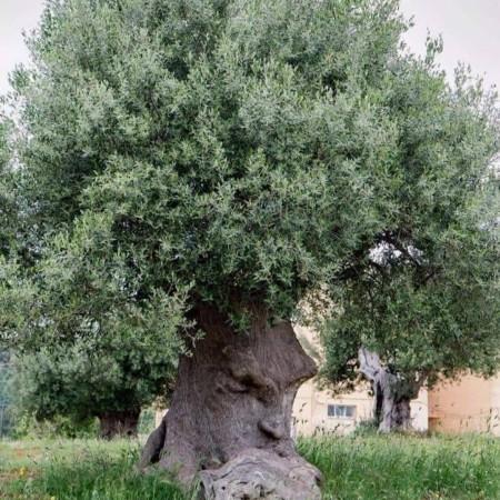"""""""The thinking tree"""" in Italy"""