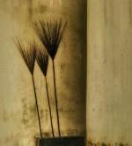 By Olga-Leskiw-Suzuki