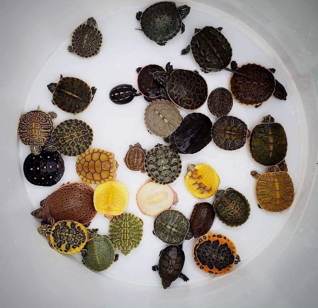 Nice turtle collection, buddy