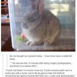 Angy rabbit