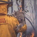 Volunteer Firefighter in Australia saving a koala bear
