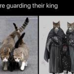 Kitty and Pürr, ominous bodyguard
