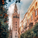 Don Remondo Street lined with orange trees next to the Giralda bell tower of Seville Cathedral, Seville, Andalusia, Spain