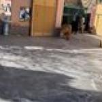 Simba walks in, hoomans take seat…