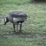 Bird giving birth while standing up