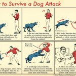 How to survive a dog attack 🐩