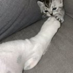 Little guy terrorizing the dog