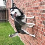 Spider dog 😮