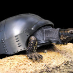 Turtle Knight, the unstoppable