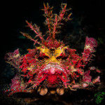 The Scorpionfish Grump