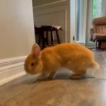 When kitten thinks he's rabbit too