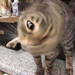 The one eye overseer of cat Topia 🐱 💛