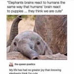 Elephants think the human is cute
