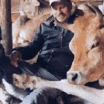 Animal sanctuary cows with the man who helped rescue them