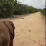 Helpful Baby Elephant