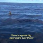 Whale pays back scientist, saving her from a shark