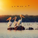 Birds at sunset, Romania, Danube Delta (photo by Dragos Plesuvescu)