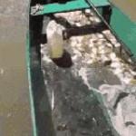 How to catch piranhas
