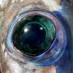 Iris of the sea, eye of the swordfish