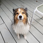 He a wet hose chasin boi