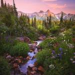Mount Rainier National Park, Washington, United States