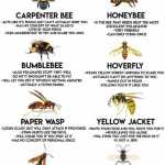 Guide to Yellow Stripey Things