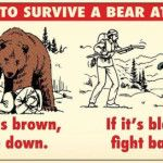 When coming in contact with a bear