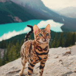 Gorgeous feline in a gorgeous landscape