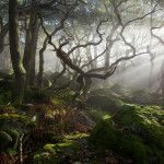 Light in the wild woodland