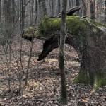 Dragon treestump