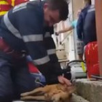 Firefighter performs CPR on a dog that inhaled too much smoke in a house fire. The dog was resuscitated and given oxygen and later made a full recovery!