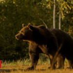 Prince blamed for shooting one of Europe's biggest bears