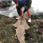 Man saves cute shark