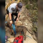 'Rare and risky' rescue saves dog trapped on ledge above B.C. waterfall