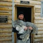 Canadian Lynx 😮