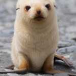 Baby seal looks like a puppy
