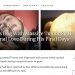 Man Adopts Dog With Massive Tumor So He Can Feel Unconditional Love During His Final Days 🐕