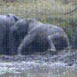 Baby elephants snuggling
