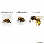 Fuck wasps
