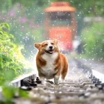 Happy day in the rain