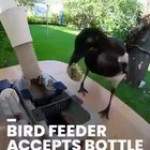 Bird feeder accepts bottle caps for food