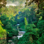 The Borneo Jungle, photo by Frans Lanting