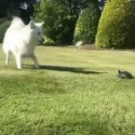 Speedy turtle surprises dog