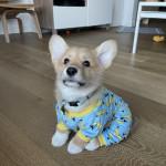 Darwin loves his banana pajamas