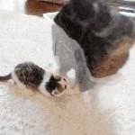 Summersalter Cat XD