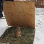 Spoiled brat hates snow.