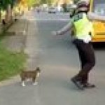 Just a Traffic Cop helping a nervous cat across the street