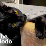Cat goes WILD for Trader Joe's ciabatta!