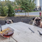 These 2 pugs just jumped onto our table as we were eating dinner