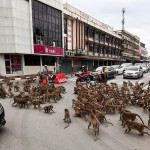 Rival Monkey tribes fight in the middle of a busy Thailand street stopping traffic 🐵